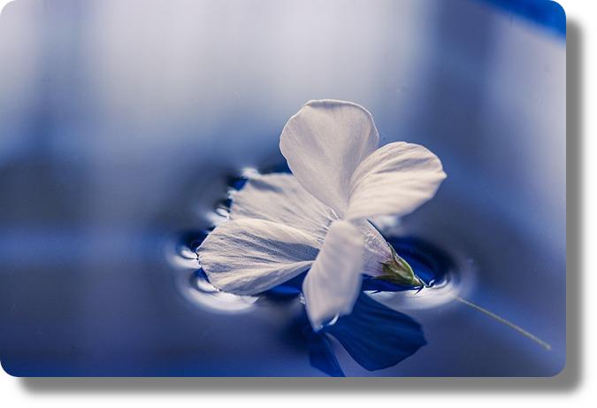 floating_flower Hypersensibilité : le test