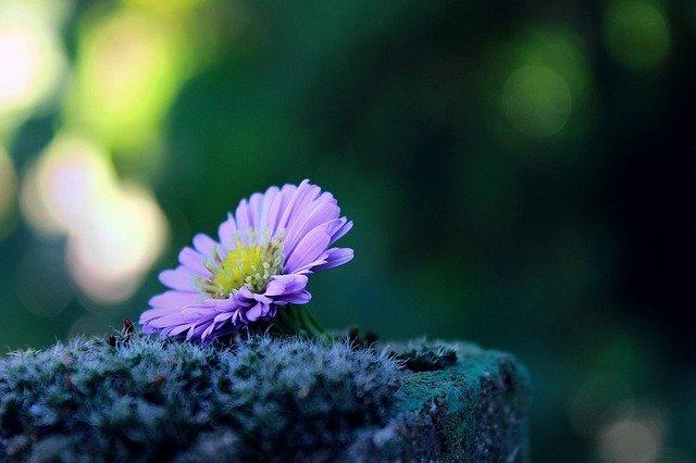 flower-1739892_640 Home