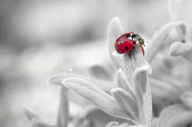 ladybug-796483_640 Home